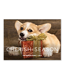 Cherish Dots Holiday Photo Cards